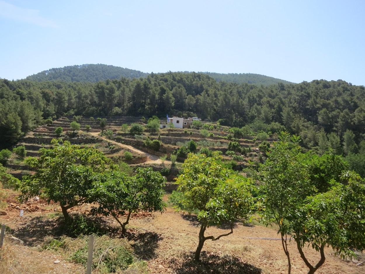 HETibiza Jeepsafari Ibiza terrassen